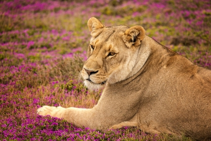 Conhecer e ver os hábitos dos animais em sua casa...nosso presente nesse Safari.